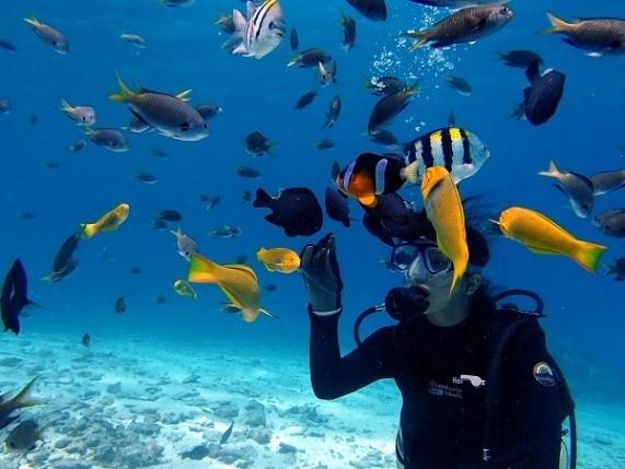 【冬季】水納島体験ダイビング