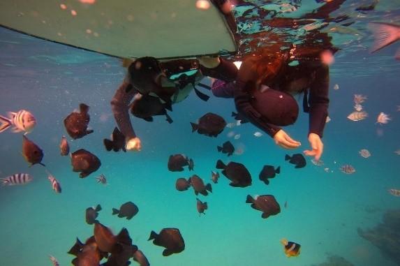 【冬季】瀬底島ボートシュノーケリング&熱帯魚ウォッチング