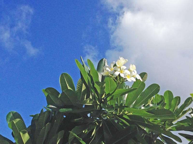 【営業時間変更のお知らせ】マハイナ オキナワン ヴィレッジ インフォメーション