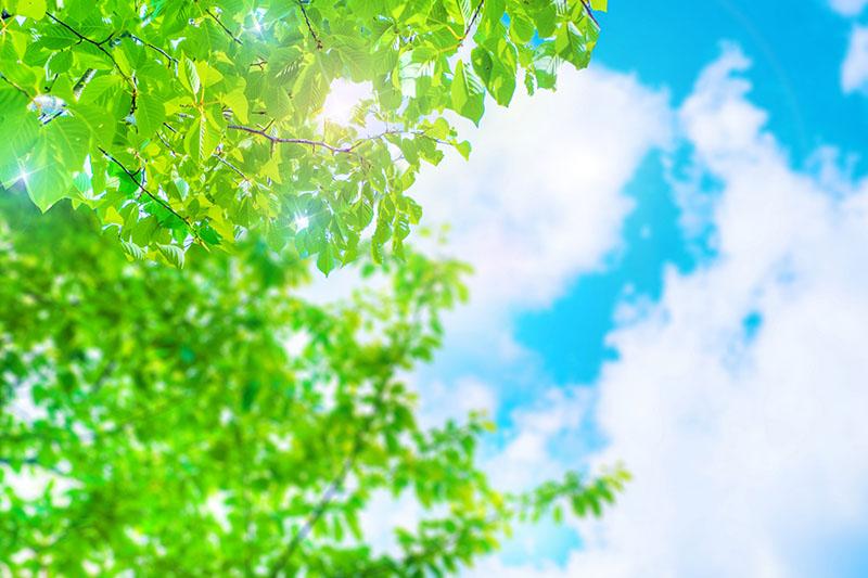 【近隣イベント】第1回もとぶ八重岳新緑まつり